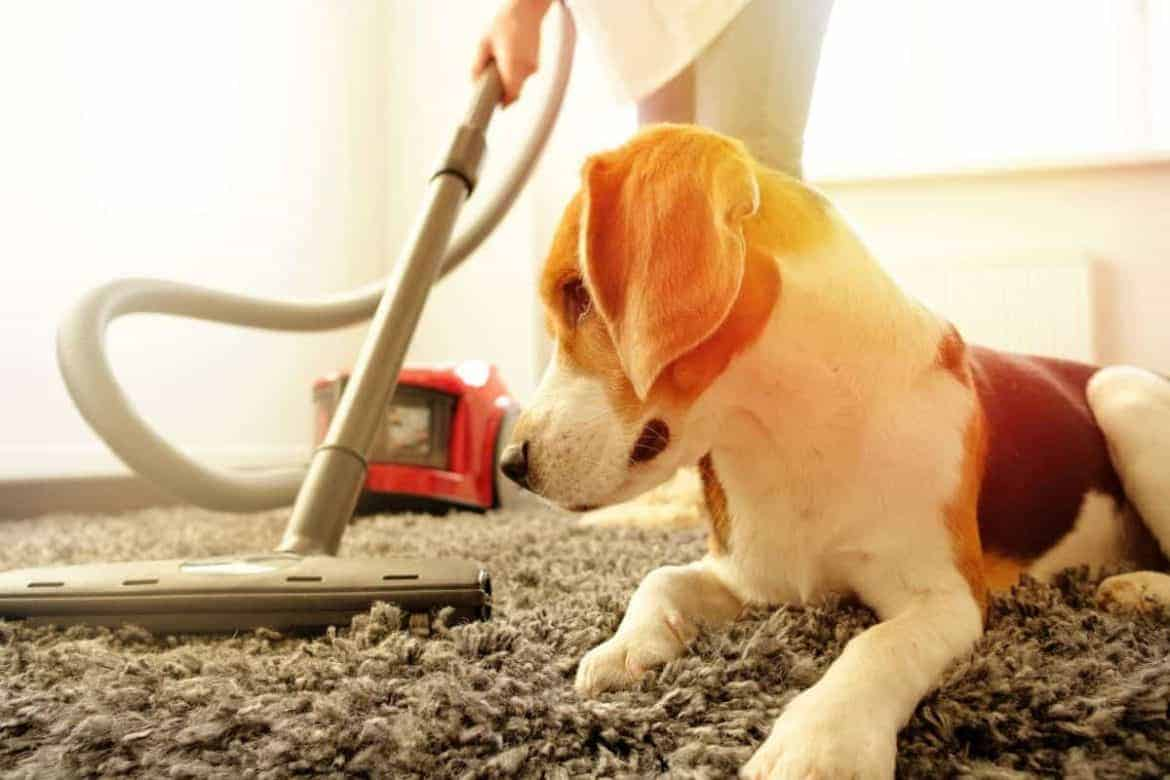 How to Clean Pets Hair