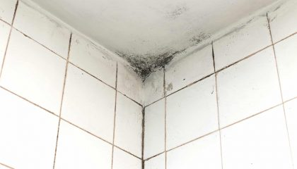 Bathroom Mold Cleaning Tips Longueuil
